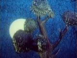 Шарик-фонарик. СССР, Союзмультфильм. Кукольный мультфильм. 1980 год