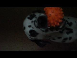 Нейка играет с мячиком ^^