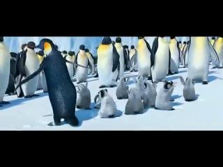 Пингвины танцуют марийский танец - Станислав Шакиров.