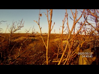 охота на гусей ( в тундре)