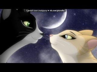Картинки коты воители видео