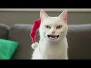 Поздравление от кота с Рождеством и Новым годом
