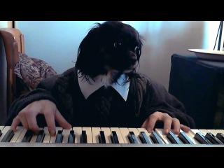 Собака Октопуса не имеет музыкального слуха, но её это совершенно не парит..
