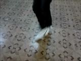 DnB Dance by Ko.Otik