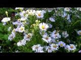 мой сад под музыку Георгий Абрамов - Хороши весной в саду цветочки. Picrolla