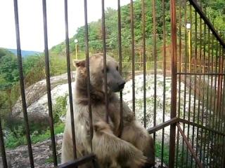 Ручной медведь в зоопарке