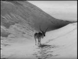 Белый олень / Белая олениха / Valkoinen peura (1952) рус.