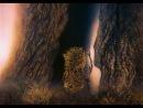 Ёжик в тумане (HD 1280x900)