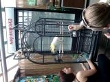 Танець попугая в Едемському саді, В Київському ботанічному саді ім.Гришка