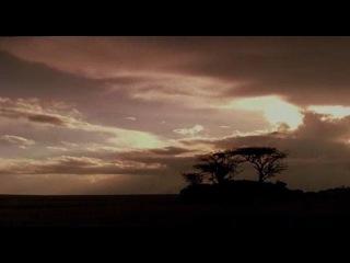 BBC: Живая природа. Ребятам о зверятах / BBC: All About Animals (Season 4, episode 5) (2006) DVDRip