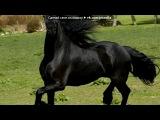 «лошади» под музыку бахталэ рома - на беговых конях. Picrolla