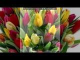 «квітти» под музыку С 8 марта!!! - Ой, девчонки, у нас всё сбудется!. Picrolla