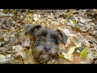 «осенний подарок» под музыку ✰Мелодии уходящего века✰ - Собирая осенние листья.... Picrolla