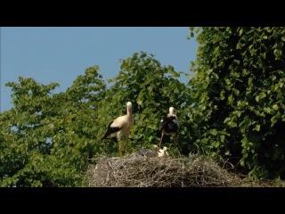 Дикая природа Германии / Wildes Deutschland (2012) 1