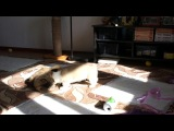 Вики-малышка и Кот)