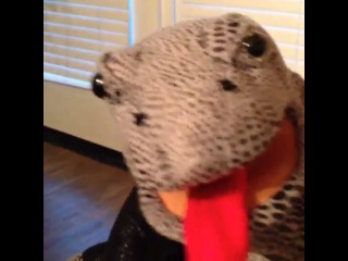 Lincoln the lizard... Oh yea...