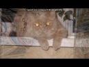 «Мой котя Сэр Персивальд!:)» под музыку Элвин и бурундуки - Tik Tok KESHA в исполнении выше перечисленных. Picrolla