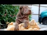 собаки под музыку Krec ft. Ассаи - Собака. Picrolla