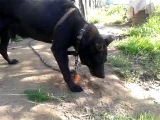 Собака всеподрядпожирака из Барзовки!!!!)))