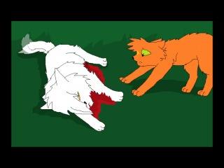 Коты воители бич анимация