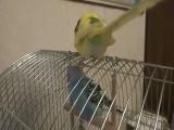 Арчик - говорящий попугай. Знакомство с Бэллой.