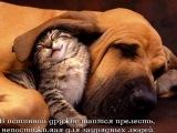 Мудрые мысли - Афоризмы, Цитаты. By http://vk.com/factoffme