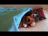 Кот обнимает плюшевого мишку