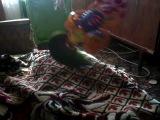 Птичка Шуня