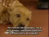 Двуногая собака по кличке Вера