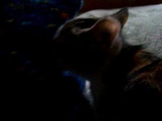 Теффи-кот