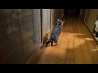 Задняя лапа кота на батарейках)))