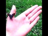 бабочка:***очень красивая!
