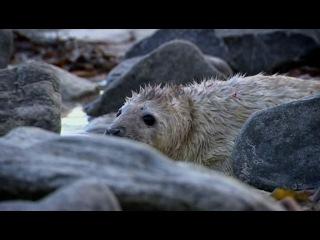 BBC: Рассказы о животных / BBC: Wild Tales (episodes 2-20) (1996) DVDRip