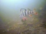 Ловля окуня(подводная съемка-на 1:20 щука-ваще жесть)