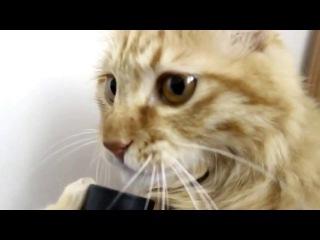 Кошка прикольно лижет трубку от пылесоса=))