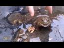 ржачное видео с лягушкой