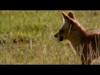 BBC: Живая природа. Ребятам о зверятах / BBC: All About Animals (Season 5, episode 2) (2006) DVDRip