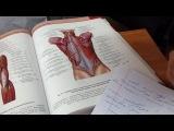 Мышцы спины. Мышцы живота. Мышцы груди. Анатомия. Урок 3