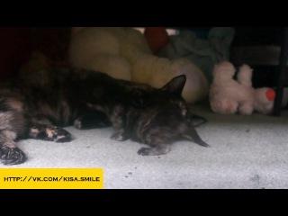 Первые неуклюжие шаги ==Kisa Smile== Прикольные фото и видео с кошками