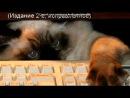 «котики» под музыку Кеша - Тик-ток(ремикс). Picrolla