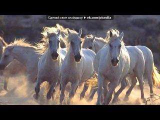 «Лошади - моя любовь» под музыку Спирит. Душа прерий - Красивая мелодия. Picrolla