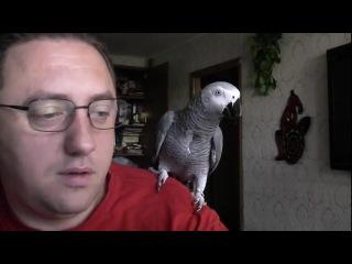 Самый умный говорящий попугай ГРИГОРИЙ).