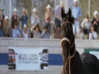 любовь к лошади....     (конный спорт / equestrian / конкур / выездка / троеборье / соревнования / horse / всадник )