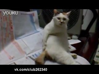 У кота жопа чешется :D