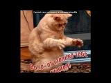 Красивые Фото fotiko.ru под музыку Ооочень смешная песенка - про кота. Picrolla