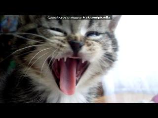 «котятам уже 1 месяц» под музыку Танцы народов мира - Летка - Енька. Picrolla