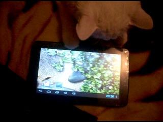 мои глупые кот и кошка..))