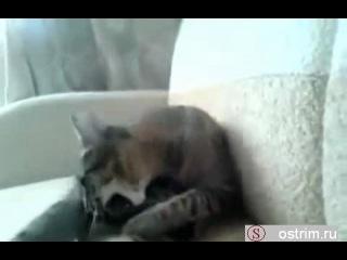 Кот сам себя избил, потом сам себе за это отомстил