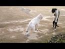 Кошак - мастер кунгфу.