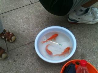 Чудная рыбалка!